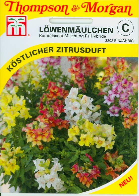 Antirrhinum Reminiscent Mixed F1 Hybrid NEW einj.