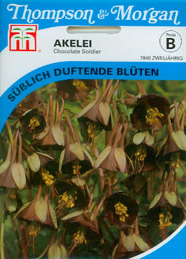 Akelei Chocolate Soldier Aquilegia