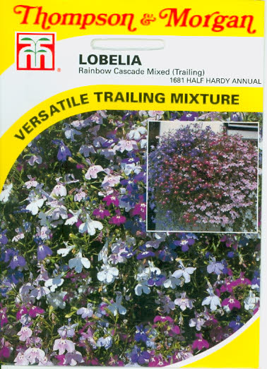 Männertreu Lobelia (hängend) Rainbow Cascade Mixed T&M UK