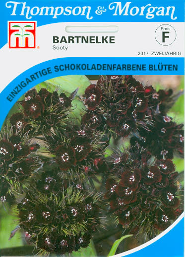 Bartnelken Sooty T&M