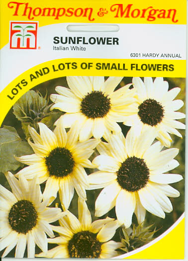 Sonnenblumen Sunflower Italian White T&M UK