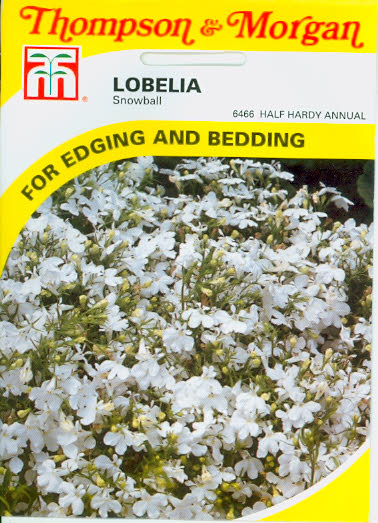 Männertreu Lobelia Snowball T&M UK