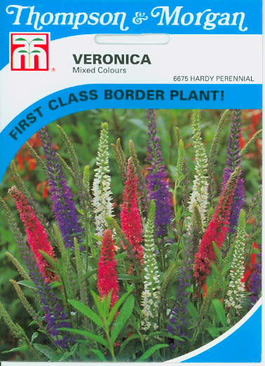 Ehrenpreis Ehrenkraut Veronica Mixed Colours T&M UK