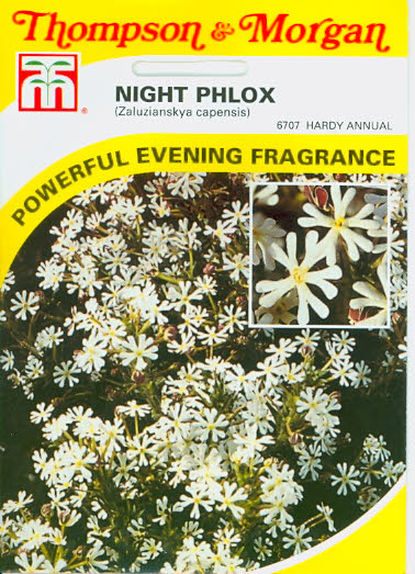 Nachtpholx Night Phlox Sternbalsam Mandelduft T&M UK