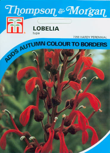 Lobelia Tupa T&M UK