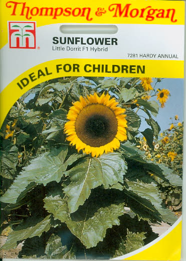 Sunflower Little Dorrit F1 Hybrid T&M UK