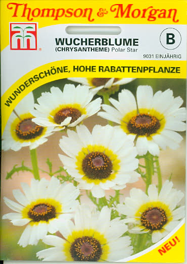 Wucherblumen (Chrysantheme) 'Polar Star' einj TMB