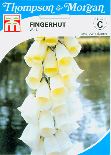 Fingerhut Digitalis purpurea Weiß