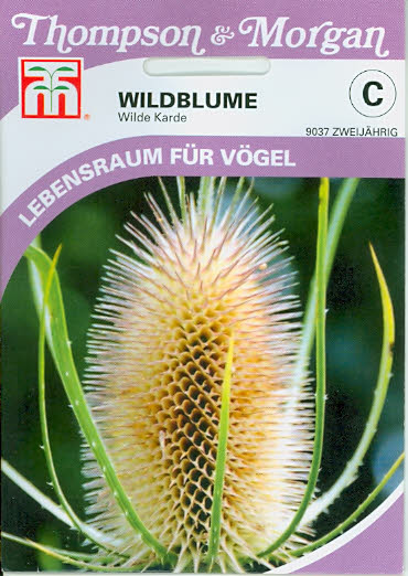 Wildflower Teasel T&M UK