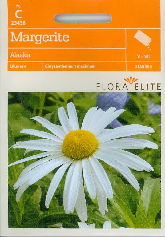 Margeriten Alaska Chrysanthemum maximum (FE c)