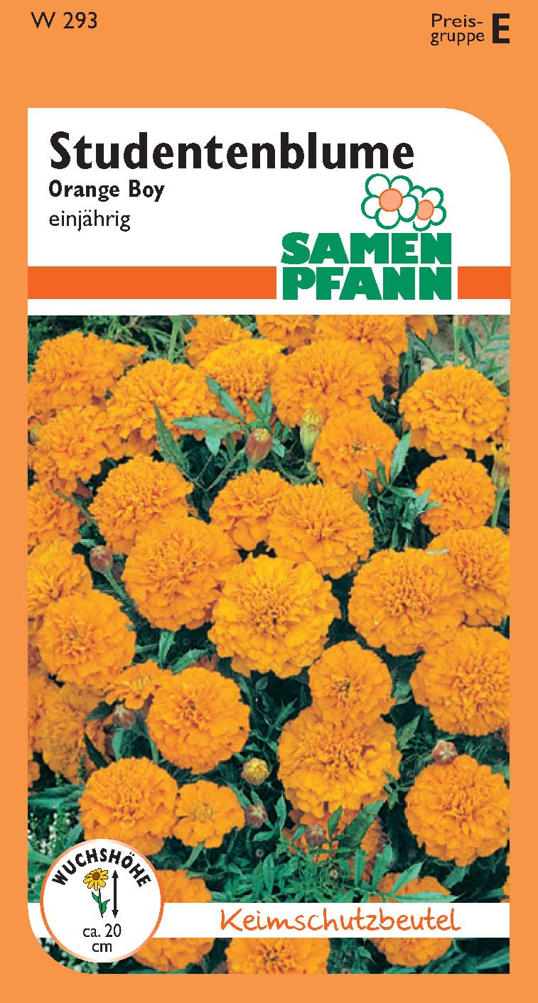 Tagetes Orange Boy (E)