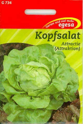 Kopfsalat Attractie Buttersalat