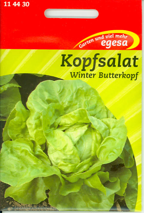 Kopfsalat Winter Butterkopf (winterhart)