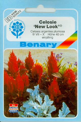New Look Celosia (H391)