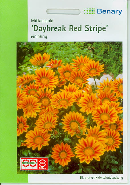 Gazania Red Stripe Mittagsgold (M421)