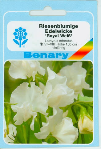 Edelwicken Lathyrus odoratus Royal Weiß BY C