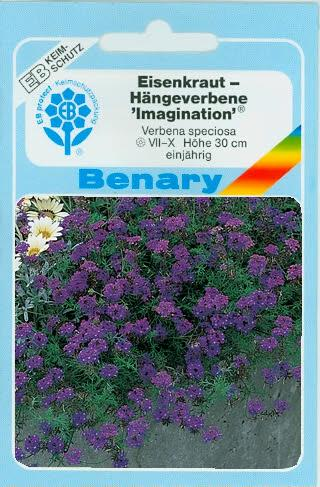 Hängeverbenen Verbena speciosa Imagination® BY J