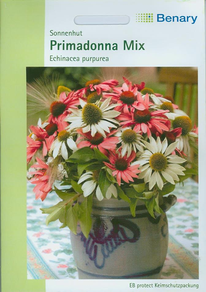 Echinacea purpurea Primadonna Mix (BY L) BellaBenary