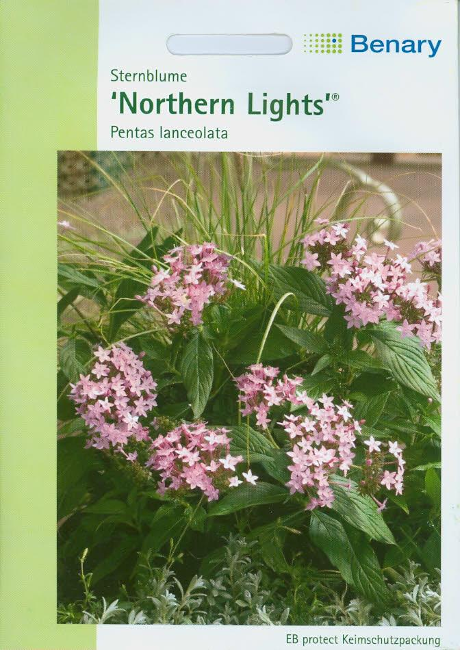 Sternblumen Pentas lanceolata Northern Lights (BY N)