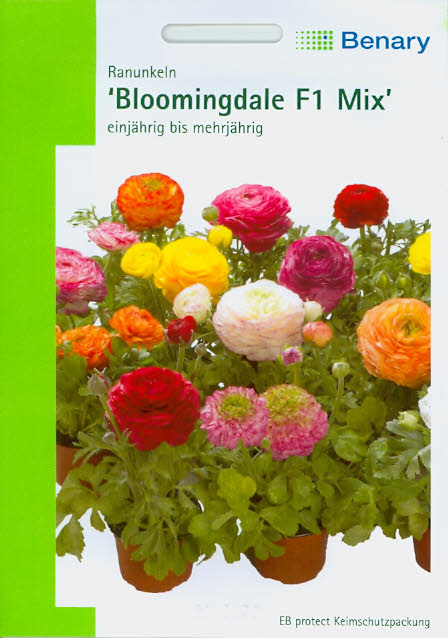 Ranunkeln Ranunculus asiaticus Bloomingdale F1 Mix BY N