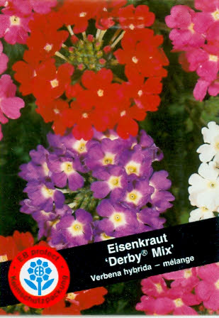 Verbena hybrida Derby® Mix Verbenen BY G