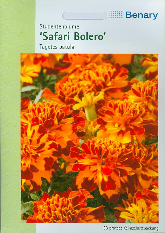 Tagetes patula Safari Bolero (BY K)