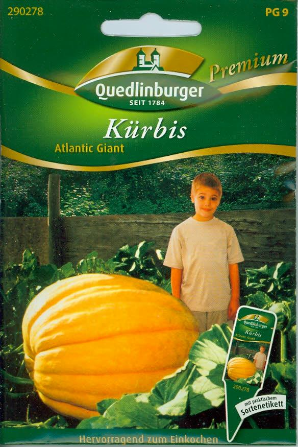 Kürbis, Atlantic Giant (Q 9)