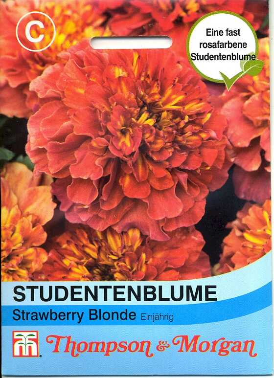 Tagetes (Studentenblume) Strawberry Blonde (TM C)