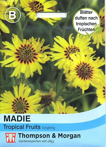 Madie Tropical Fruits - NEU Madia elegans TM B