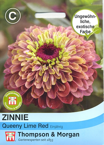 Zinnie Queeny Lime Red - NEU Z. elegans TM C